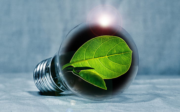 light-bulb-leaf-chlorophyll-green-preview